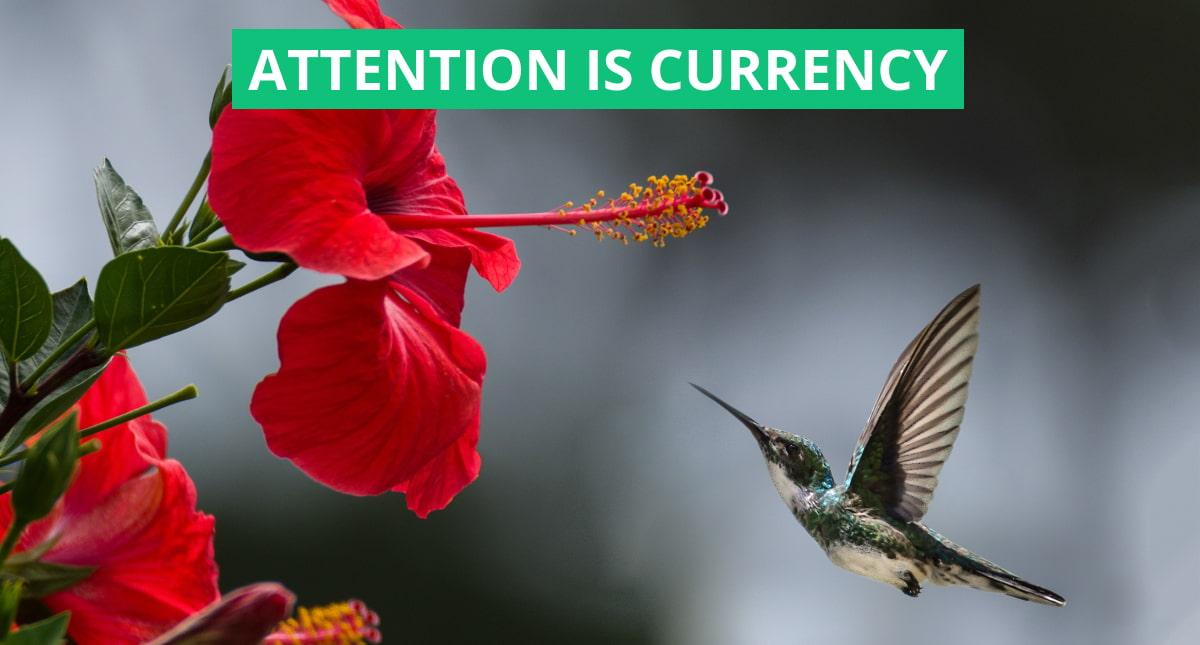 """copertina dell'articolo """"l'attenzione è la nuova valuta"""" raffigurante un colibrì in volo"""